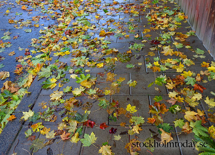 stockholm autumn leaves