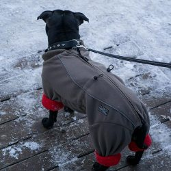 stockholm today dog clothes (Cold dog fashion in Stockholm)