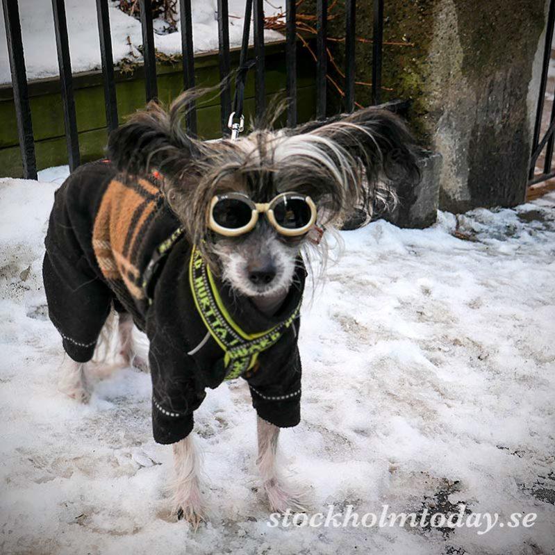 dog clothes vilda stockholm today