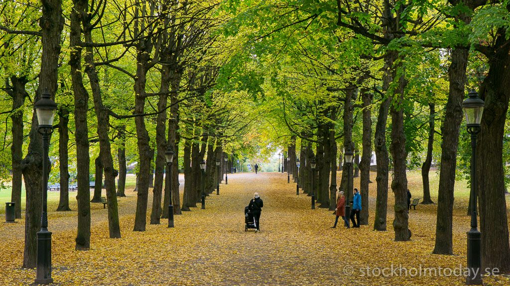 Autumn in Stockholm – rainy season