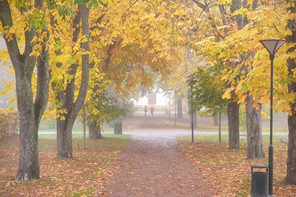 Stockholm fog distance autumn